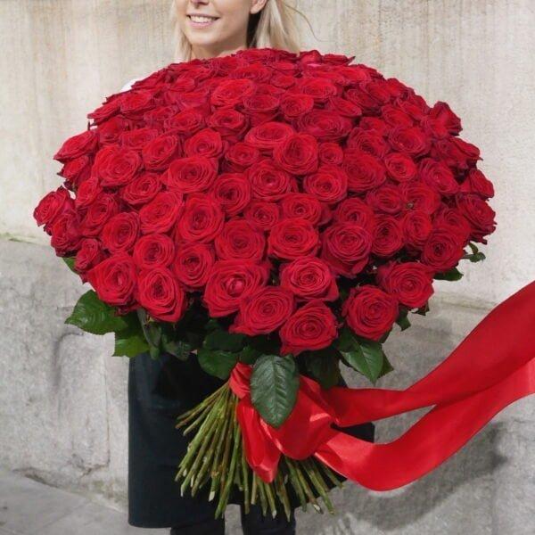 101 czerwona róża