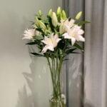 Set z lilii